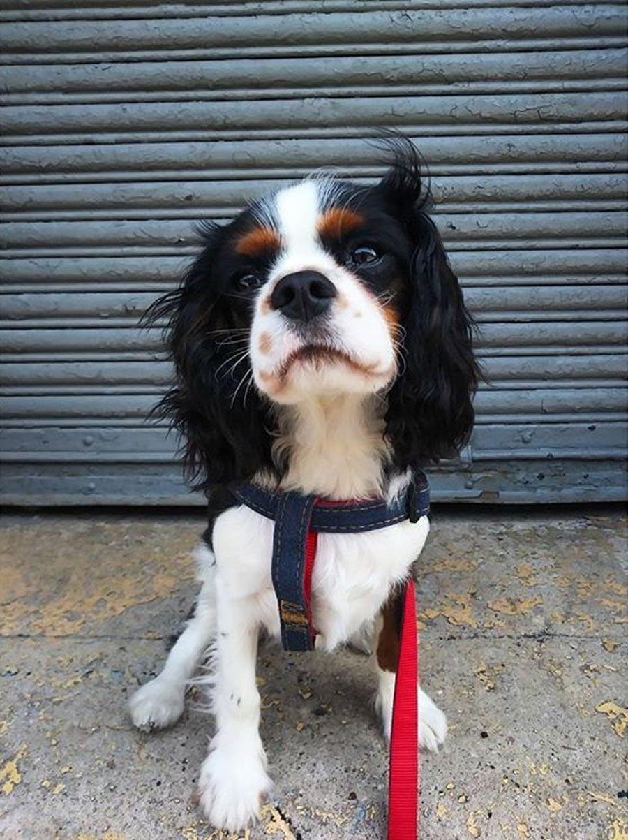 Best Hoboken Dog Walker